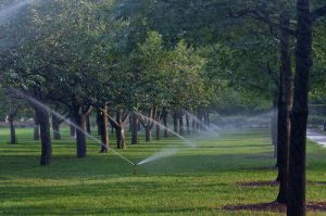 Sprinklers on the Esplanade
