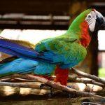 Parrot Coaching