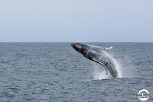 Minnows, Whales, and Books