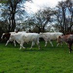 Moving cows and changing the world