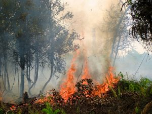 photo credit: CIFOR Forest fire via photopin (license)